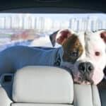 Ein Urlaub mit Listenhund kann recht umständlich für den Besitzer sein,
