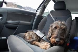 Verbraucherschutz beim Mietwagen: Der Hund ist nicht immer eingeschlossen.