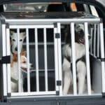 Beim Versand werden lebende Tiere als Paket an den Empfänger geschickt.
