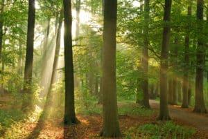 Wer im Wald jagen will, der bedarf einer Genehmigung