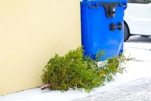 Ade Weihnachtsbaum: Ein Bußgeld kann für die illegale Entsorgung drohen.