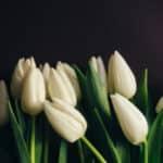 Wer zahlt die Beerdigung eines Verstorbenen?